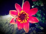 Summer Flower + Bee 2012 - 15