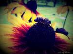 Summer Flower + Bee 2012 - 16