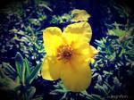 Summer Flower 2012 - 17