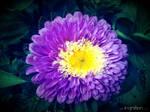 Summer Flower 2012 - 18