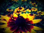 Summer Flower 2012 - 20