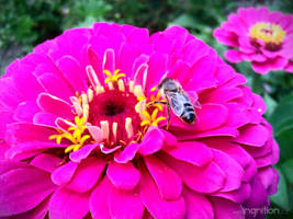Summer Flower + Bee 2012 - 23 by Ingnition