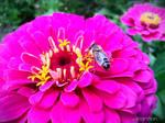 Summer Flower + Bee 2012 - 23