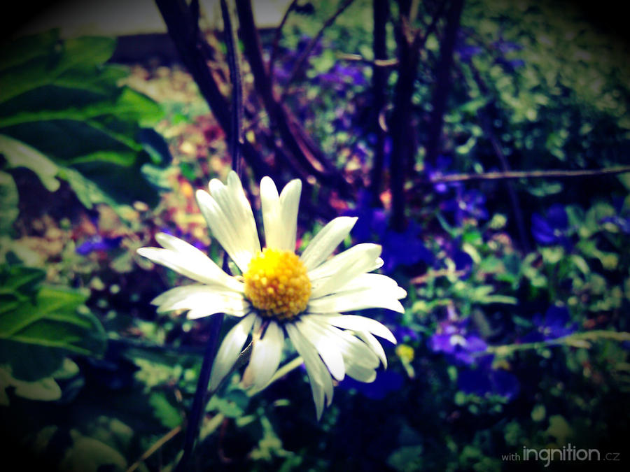 Summer Flower 2012 - 24 by Ingnition