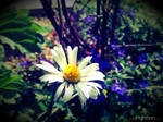 Summer Flower 2012 - 24