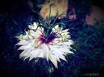 Summer Flower 2012 - 25