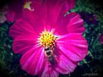 Summer Flower + Bee 2012 - 26