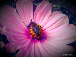 Summer Flower + Bee 2012 - 30 by Ingnition
