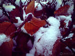 Photogallery 2014 - 01 snow