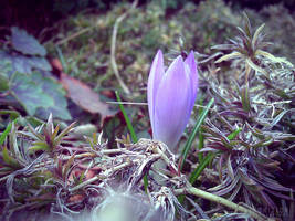 Photogallery 2014 - 03 Spring is coming? by Ingnition