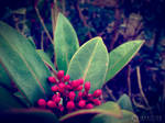 Photogallery 2014 - 04 red berries