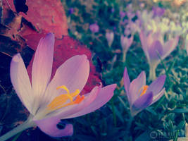 Photogallery 2014 - 05 flower dream by Ingnition
