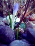 Photogallery 2014 - 06 flower snail