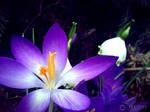 Photogallery 2014 - 07 purple flower