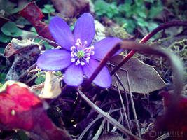 Photogallery 2014 - 08 secret flowers by Ingnition