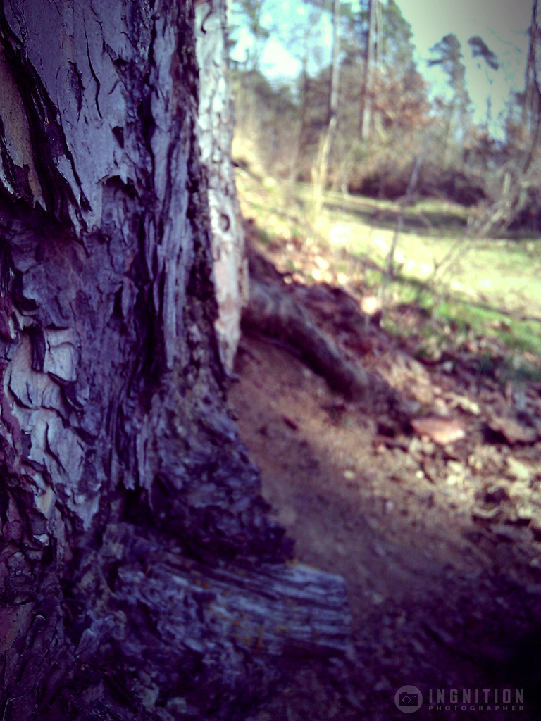 Photogallery 2014 - 10 natural wood by Ingnition