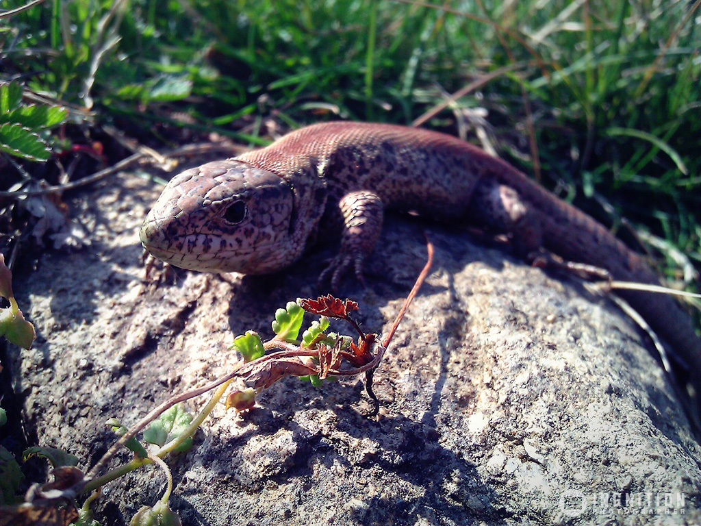 Photogallery 2014 - 11 nature guana by Ingnition