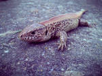 Photogallery 2014 - 12 guana by Ingnition