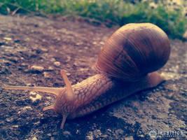 Photogallery 2014 - 15 snail