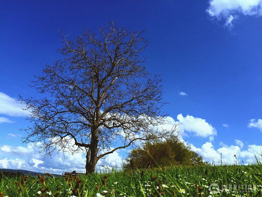 Photogallery 2015 - 05 old dead tree by Ingnition by Ingnition