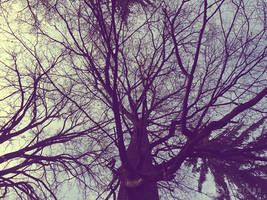 Photogallery 2015 - 12 secret tree by Ingnition by Ingnition