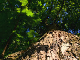 Photogallery 2015 - 14 spring tree by Ingnition by Ingnition
