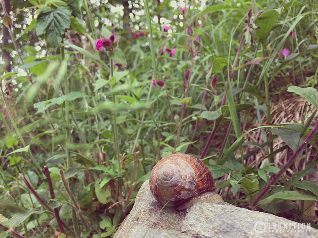 Photogallery 2015 - 21 snail by Ingnition by Ingnition
