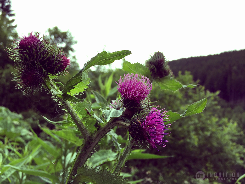 Photogallery 2015 - 22 purple flower by Ingnition by Ingnition