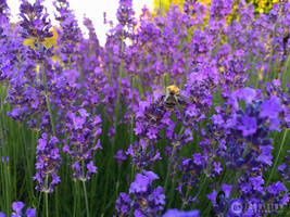 Photogallery 2015 - 26 bumblebee by Ingnition by Ingnition
