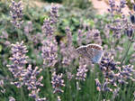 Photogallery 2015 - 29 butterfly wow by Ingnition by Ingnition