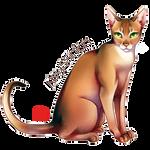 Cat serie : Abyssinian