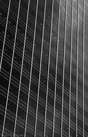 BlackWhite - 20 by RanMoneta