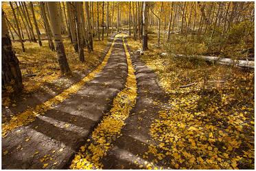 Road of Dreams by michael-dalberti