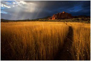 Path to Heaven by michael-dalberti