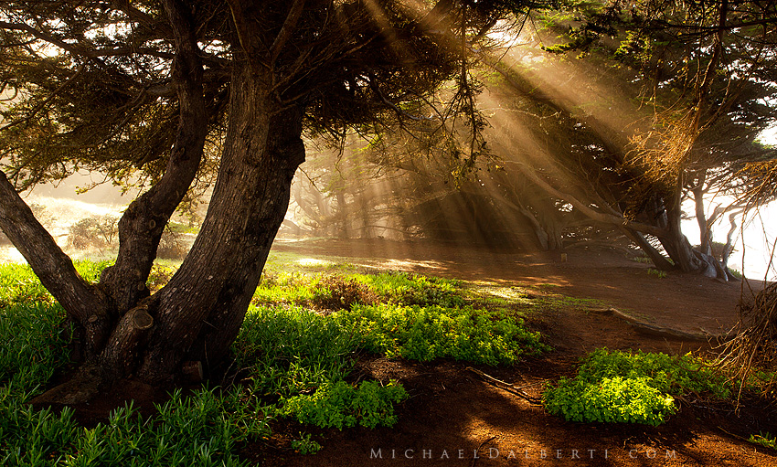 Enchanted Forest by *michael-dalberti