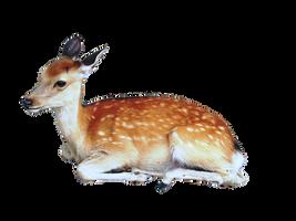 Precut Deer PNG by kayleero
