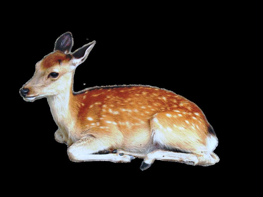 سكرابز طيور وحيوانات صور حيوانات للتصميم صور حيوانات مفرغة بدون precut_deer_png_by_kayleero-d4he5v0.png
