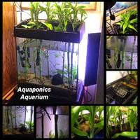 Aquaponics Aquarium by Yari-Ashigaru