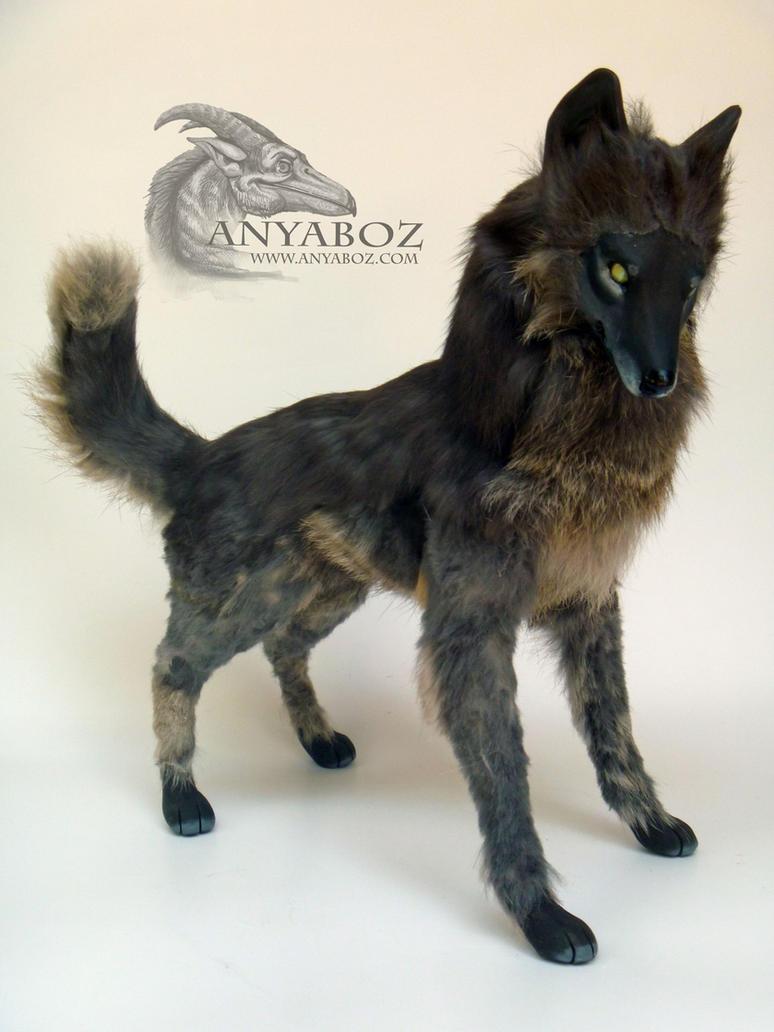 Dark Grey Wolf Pictures