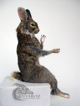Cottontail Rabbit Room Guardian