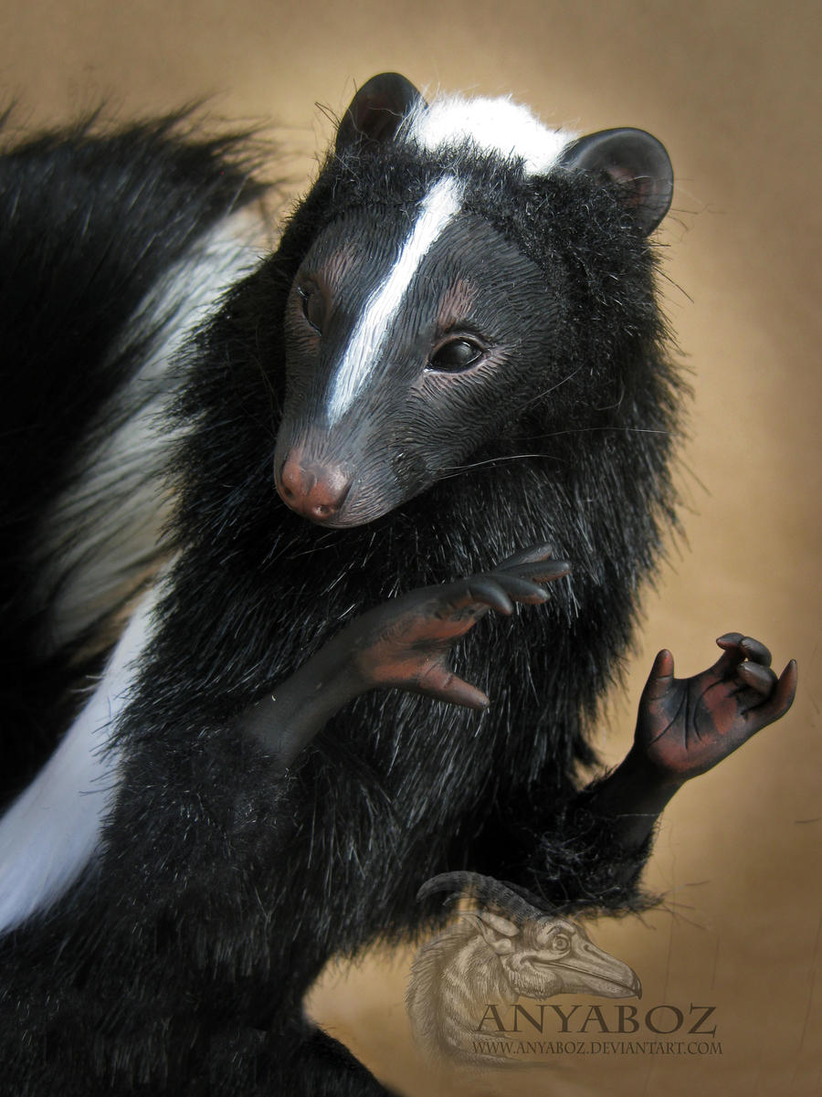 Skunks And Small Dogs