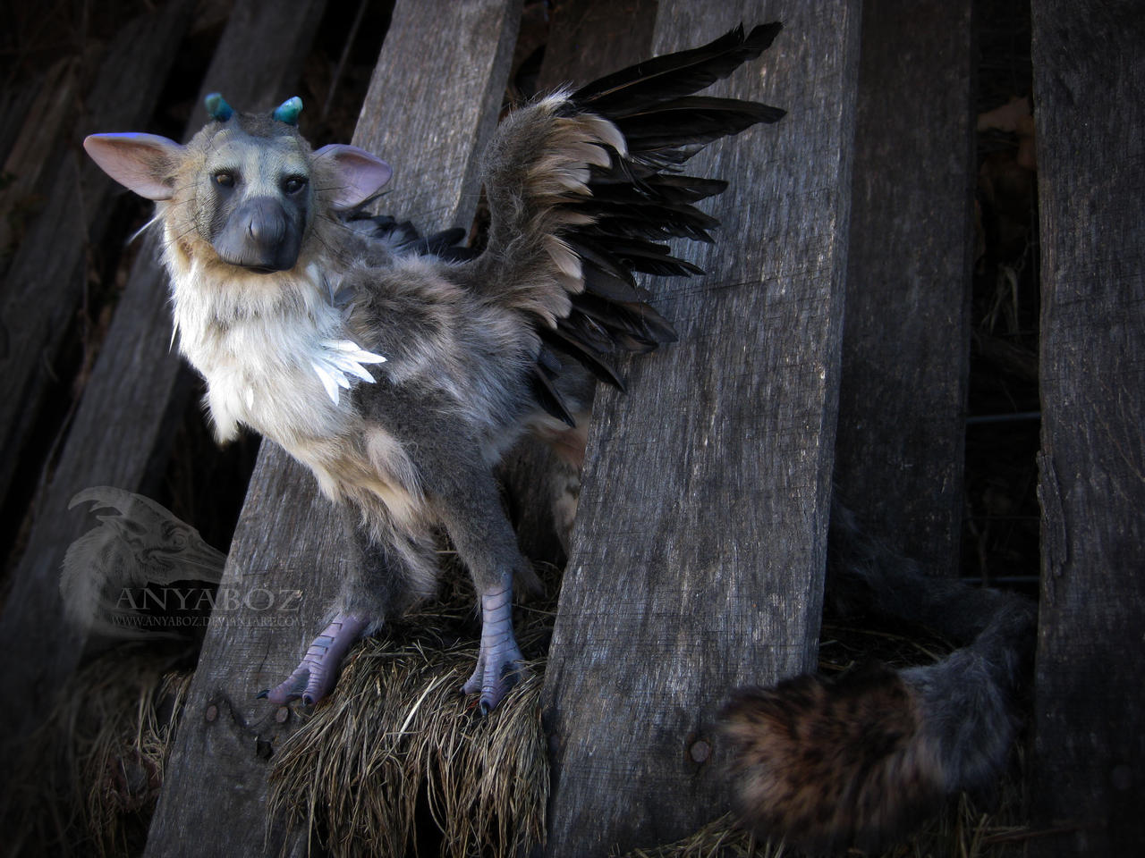 trico the last room - photo #1