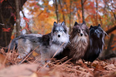 Room Guardian Wolf Pack