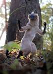 Siamese Cat Room Guardian