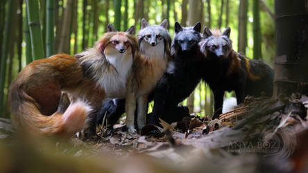 Gathering of the Foxes