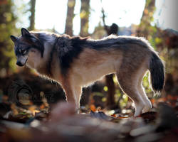 Timber Wolf Room Guardian