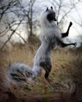 Silver Smoke Fox Room Guardian