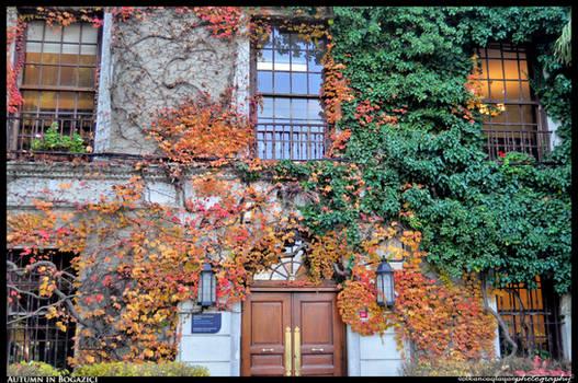Autumn in Bosphorus University