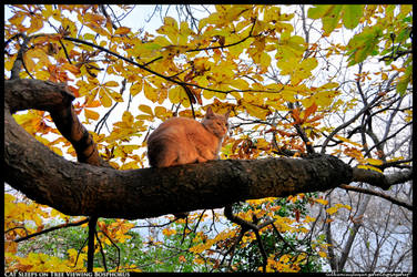 Cat sleeps on a tree viewing Bosphorus