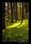 Kielder Forest by newcastlemale